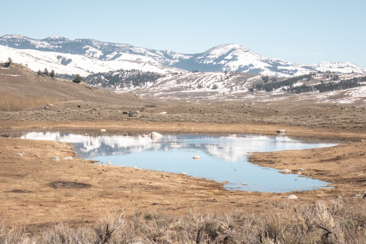 Yellowstone in April Lamar Valley