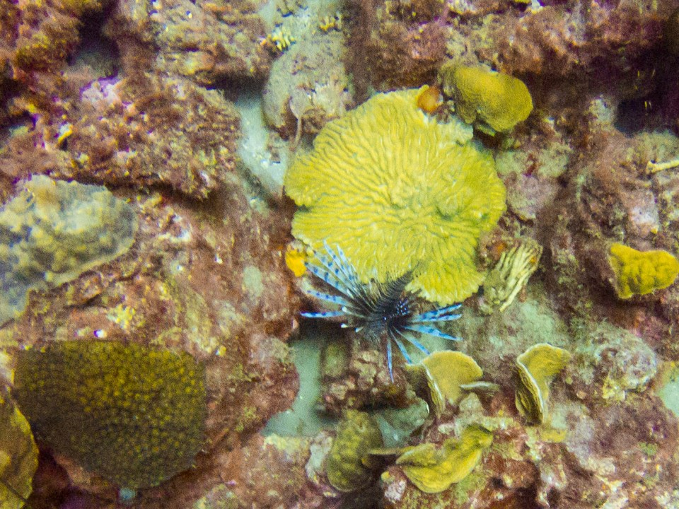 Diving in Curaçao Playa Grandi