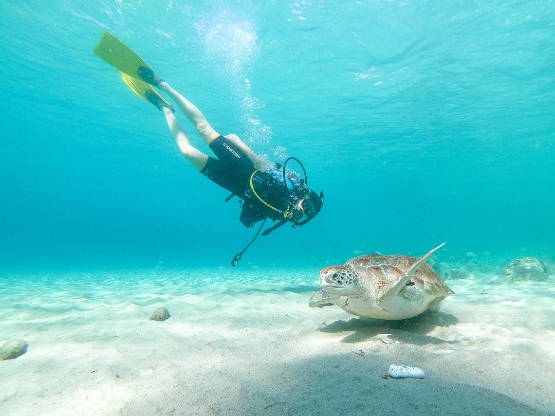 Top 10 Things to do in Curaçao - Playa Grandi Diving