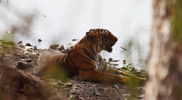 Tigers in India, Ranthambore National Park, National Parks of India, Tiger REserve