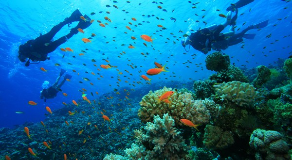 Scuba diving in india, havelock island, andaman and nicobar island