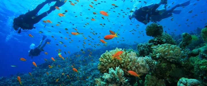 An Underwater Journey at Havelock Island