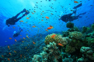 Scuba Diving in Andaman or Havelock Island