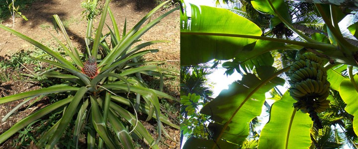 An Aromatic Trail through the Tropical Spice Plantation