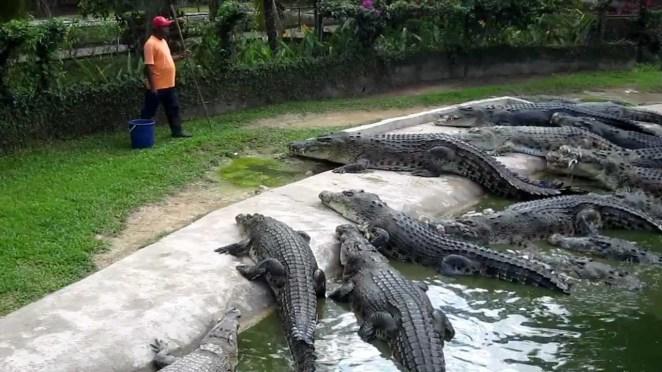 La Vanille Crocodile Park – TRAVELHUB ®