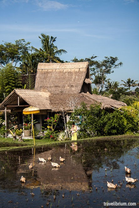 find-ubud-house_11