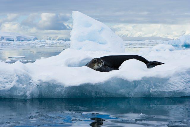 animale antarctica