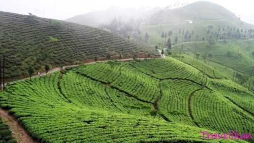 Kurseong - best places to visit in West Bengal