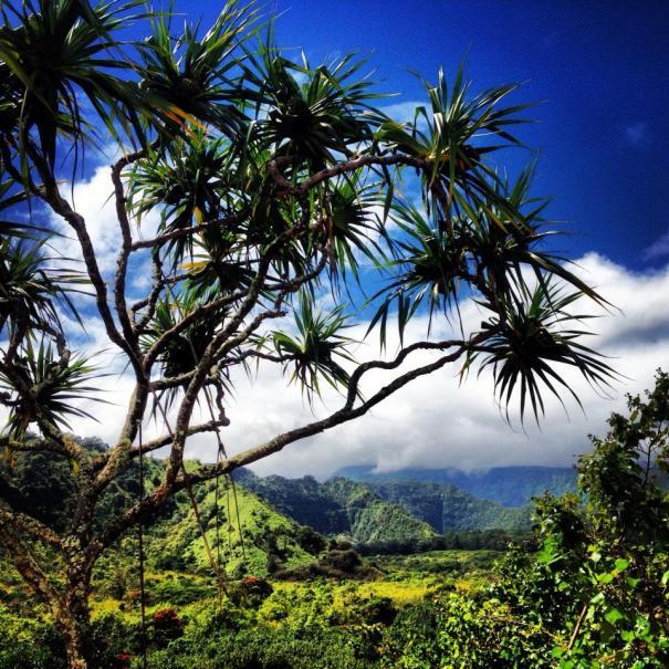 living in maui hawaii