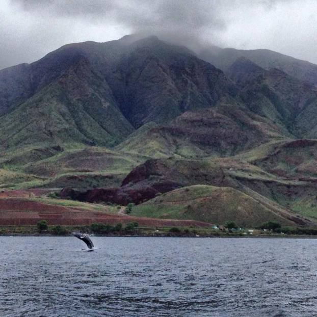 best areas to live in maui