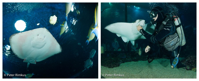 shark dive maui photography