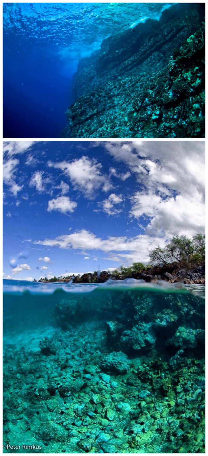 underwater photography maui hawaii