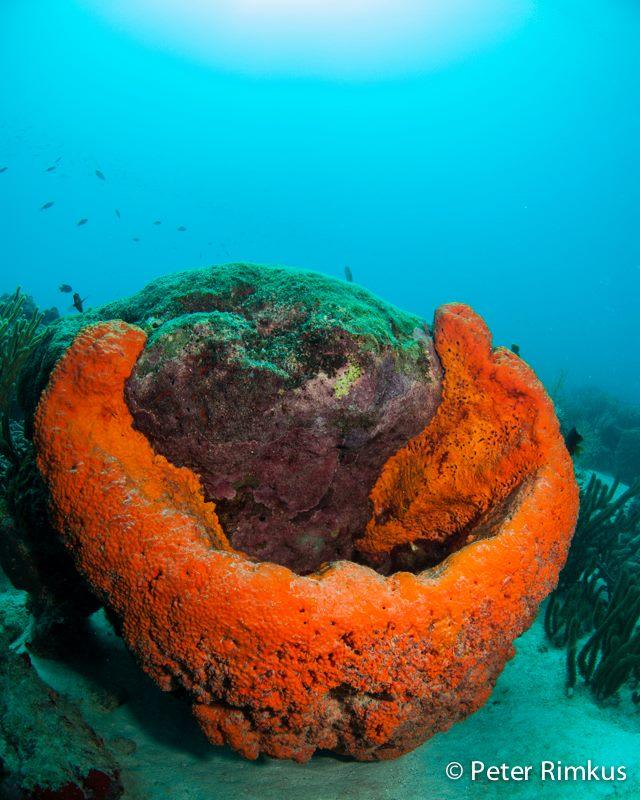 Scuba Diving Aruba