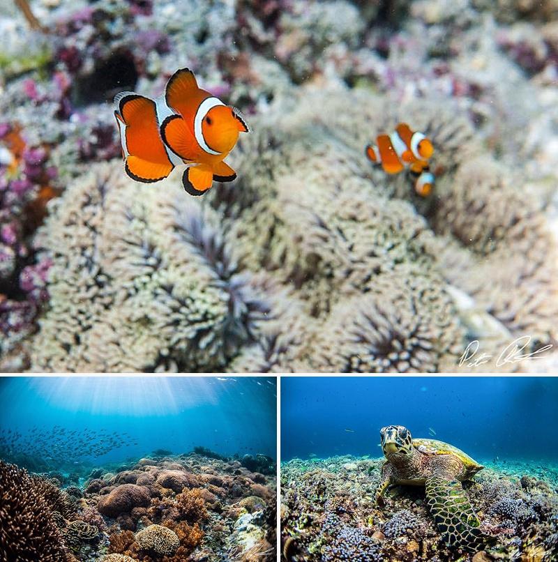 scuba diving gili air