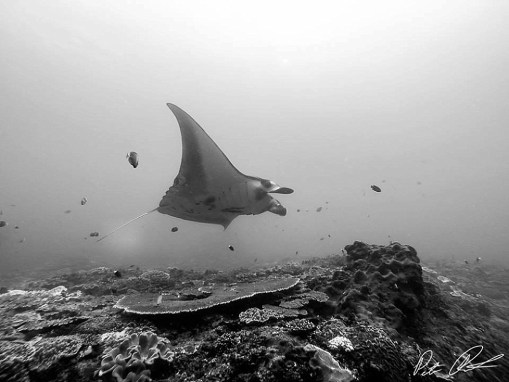 Swimming with Manta Rays in Bali