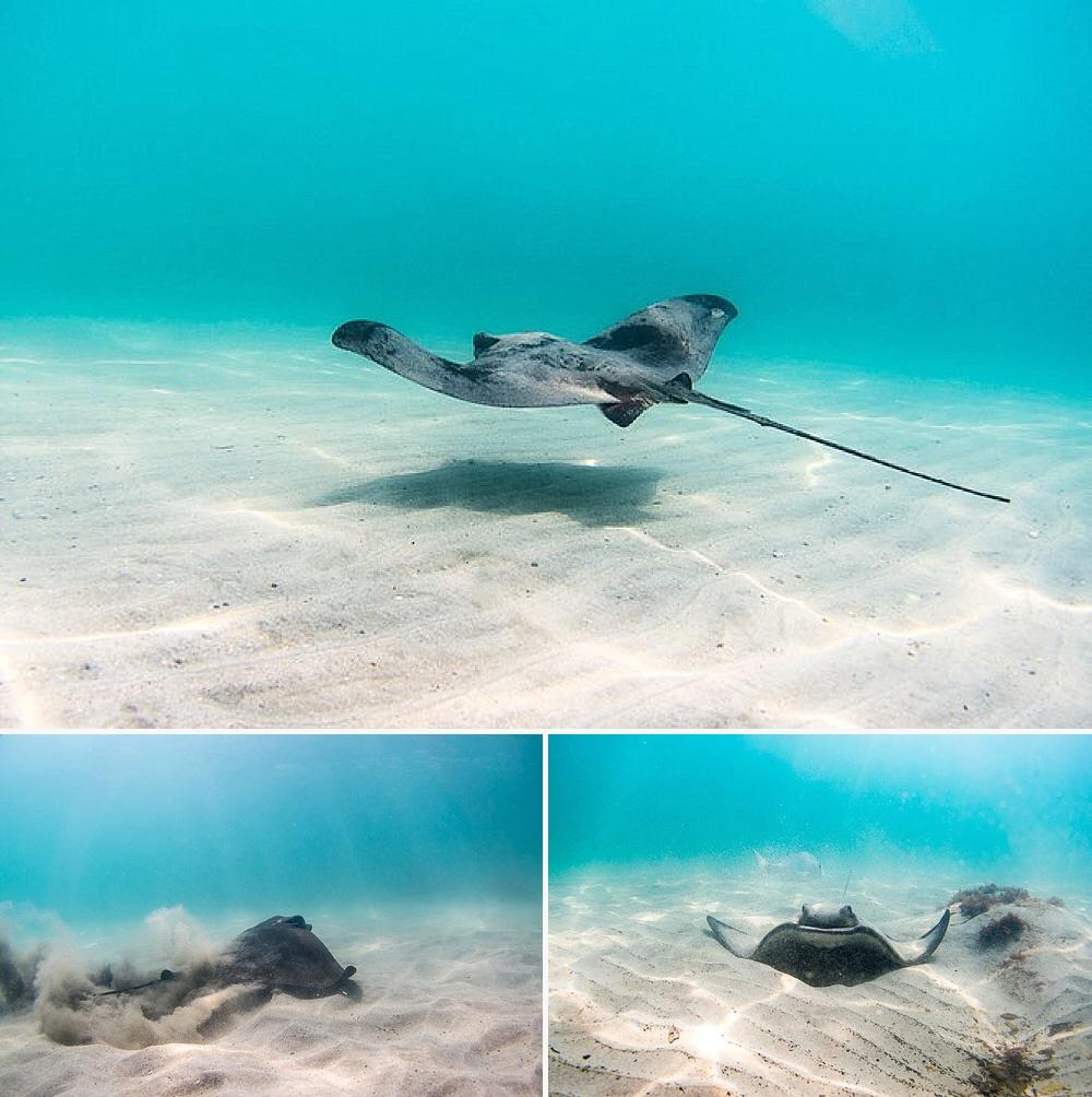 stingray bay hahei snorkeling