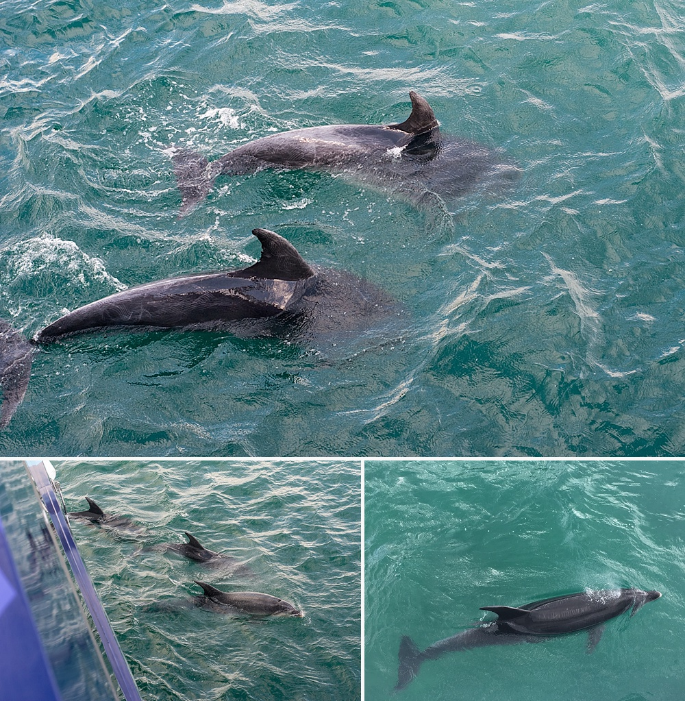 dolphin cruises bay of islands