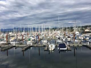 A Wharf Tour - Comox Harbour Beauty