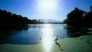 盛岡市の高松の池の景色。白鳥と鴨