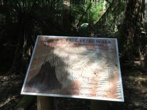 マウントフィールド国立公園「トールツリーウォーク」