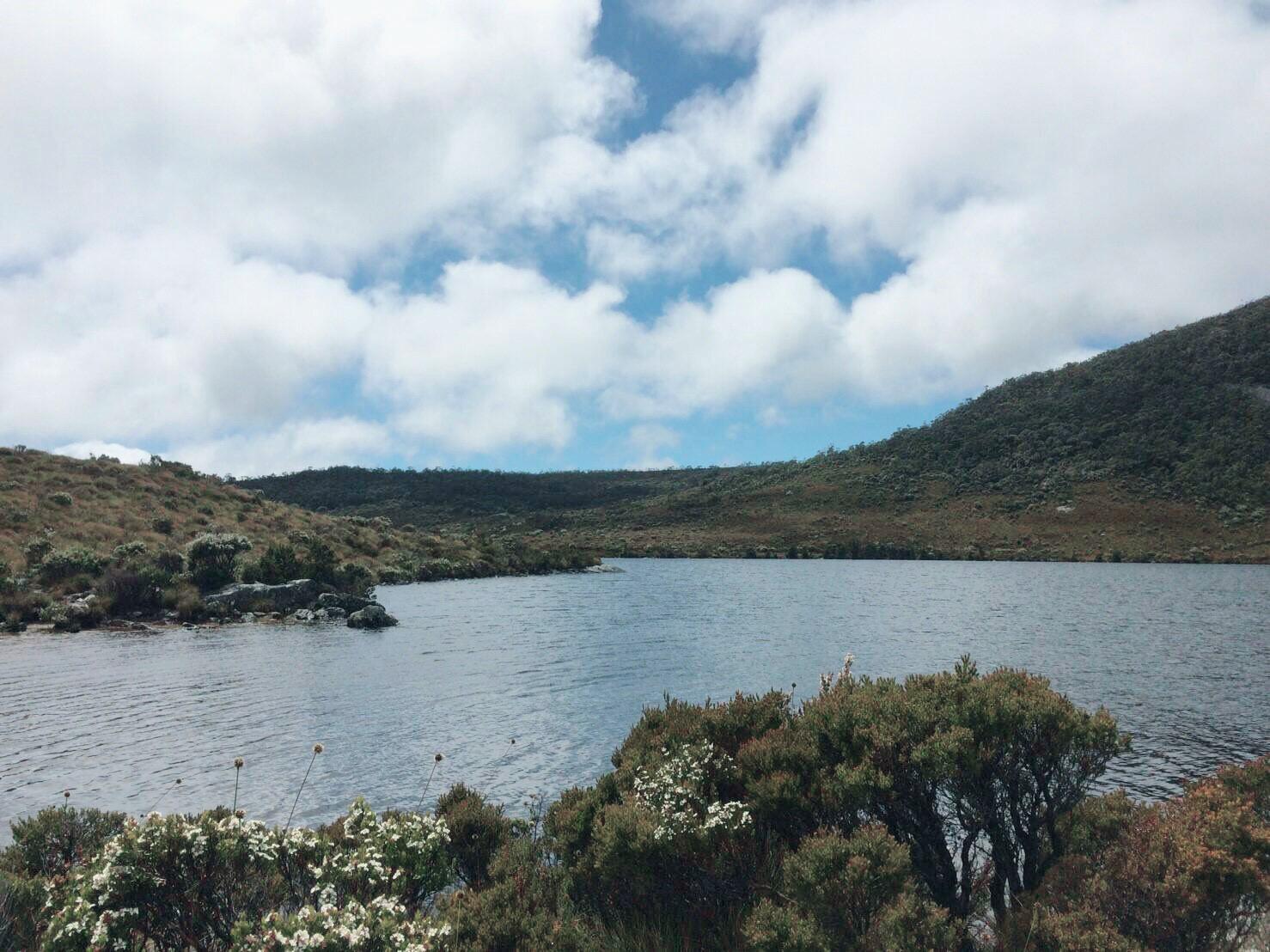 タスマニア in AUS!クレイドルマウンテン&タマーアイランド湿地帯