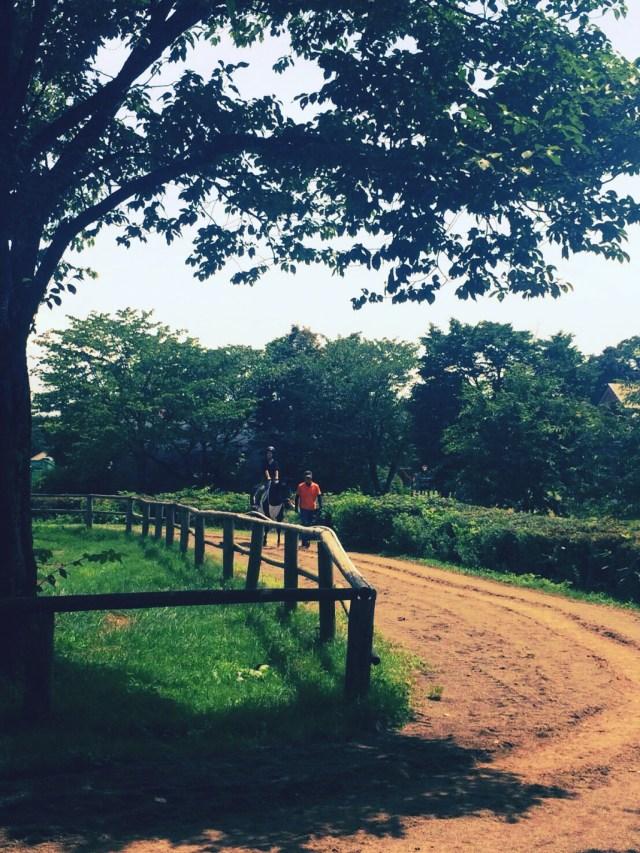小岩井農場乗馬体験