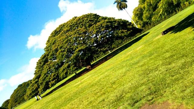 ハワイのモアナルア・ガーデン