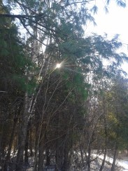 Catching the sun through the trees