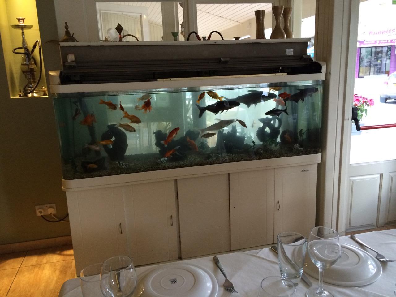 Fishtank with pet fish