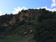 The goat backyard