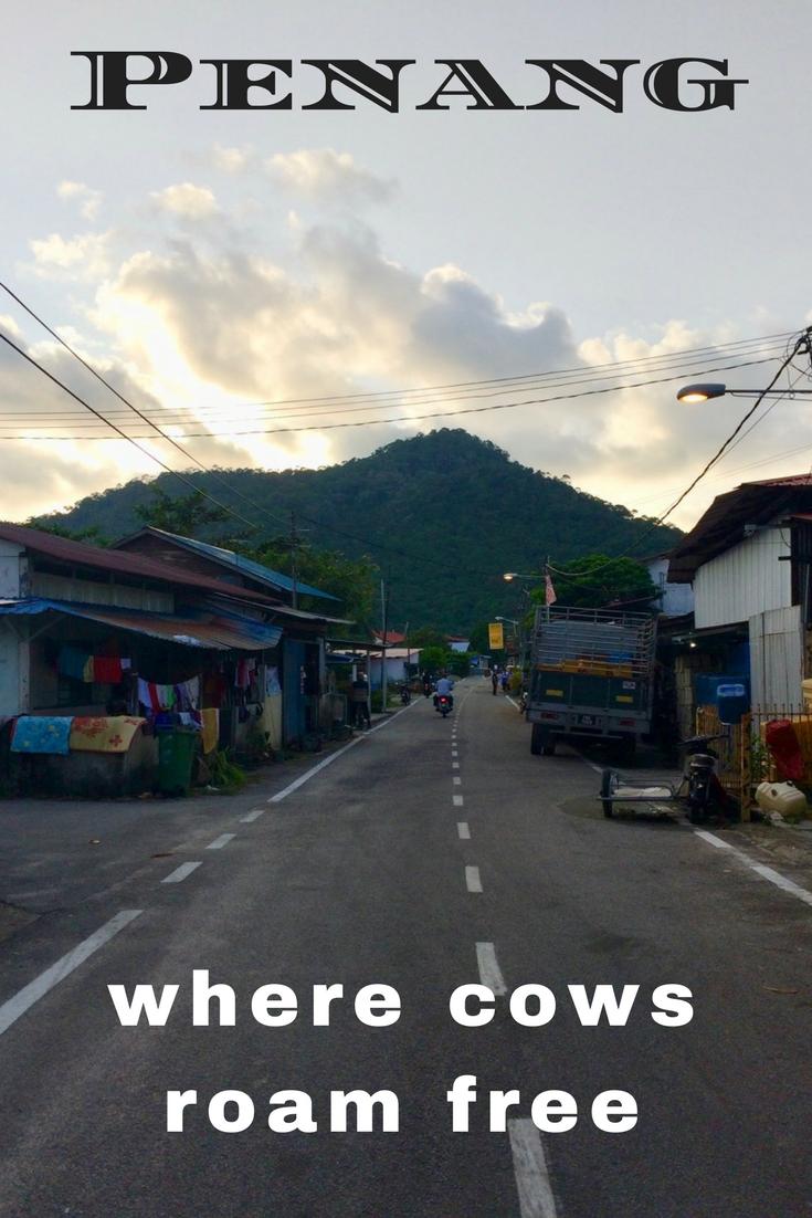 Penang Where Cows Roam Free