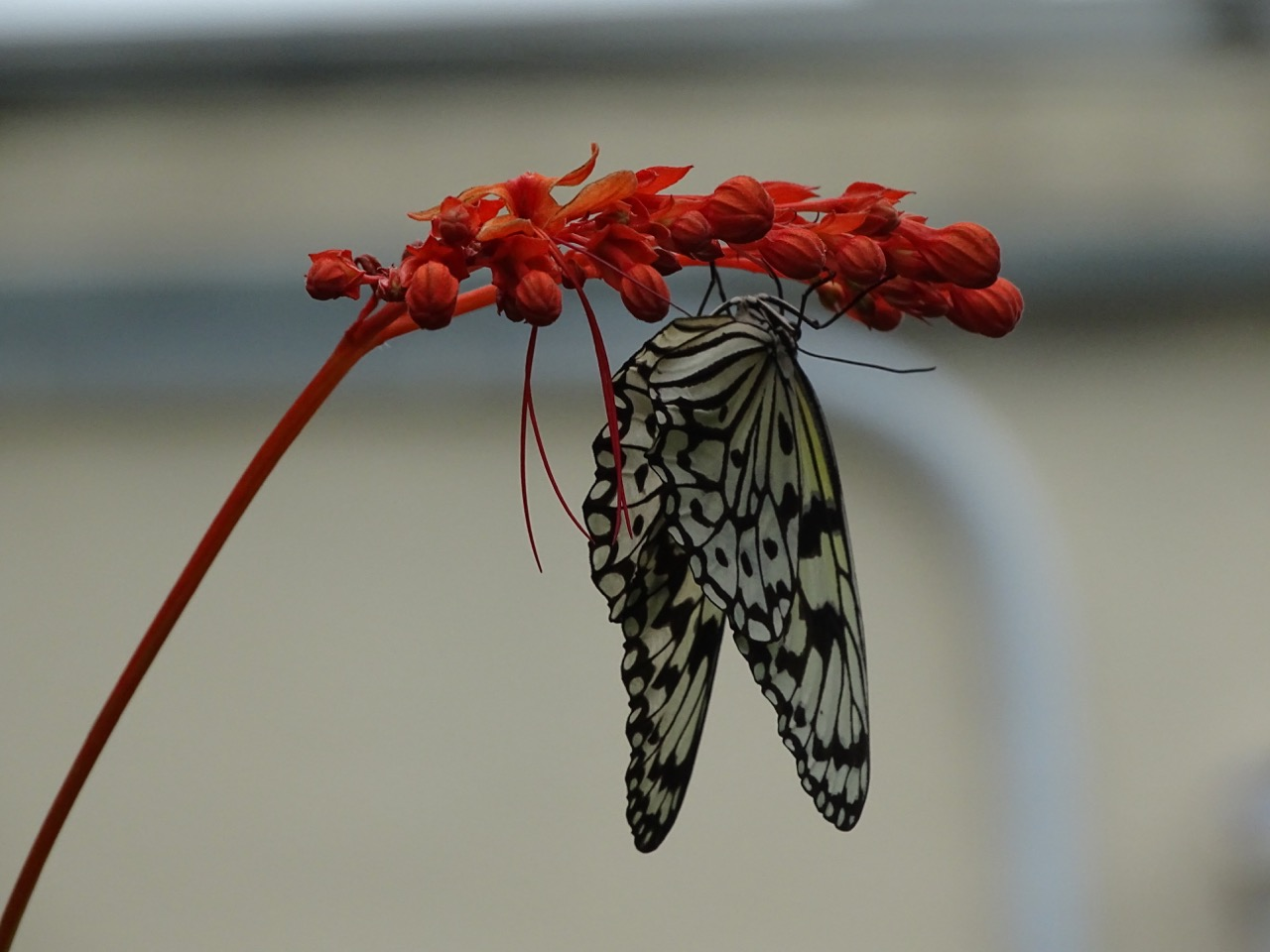 Butterfly at Taipei Zoo
