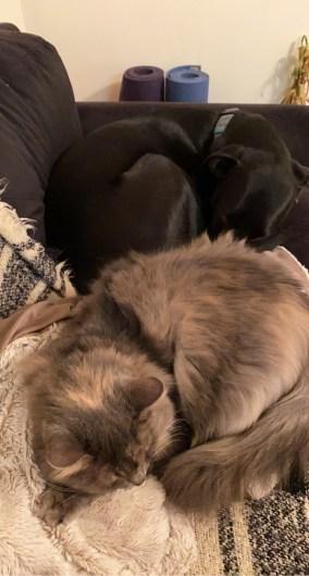 tips for kitten owners
