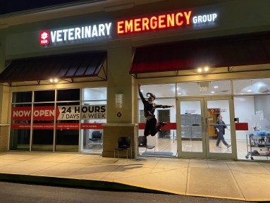 mentorship in veterinary medicine
