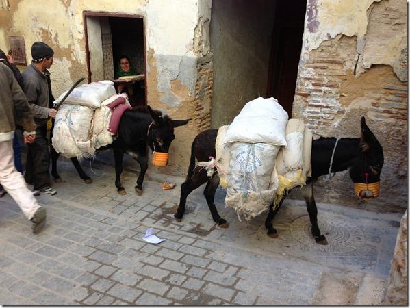 Fez Medina Donkey Travel