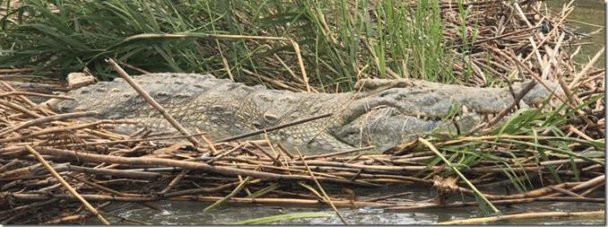 Ethiopian crock Lake Chamo