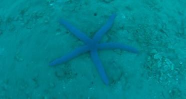 purple starfish copy