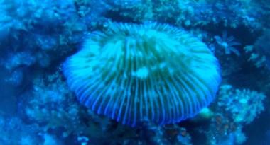 reef-thing