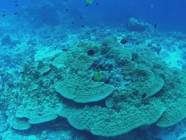 green fan reef