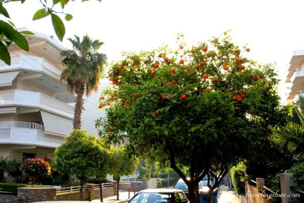 Greek oranges on the street (3)