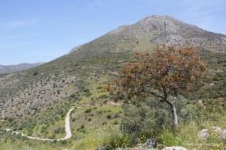 Mycenae (5)