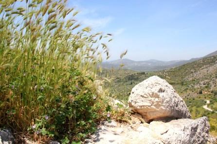 Mycenae (6)