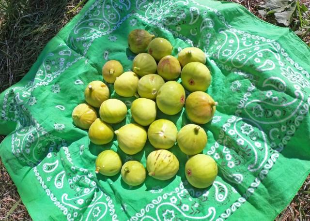 Sant'Agata de' Goti figs @travelingintandem.