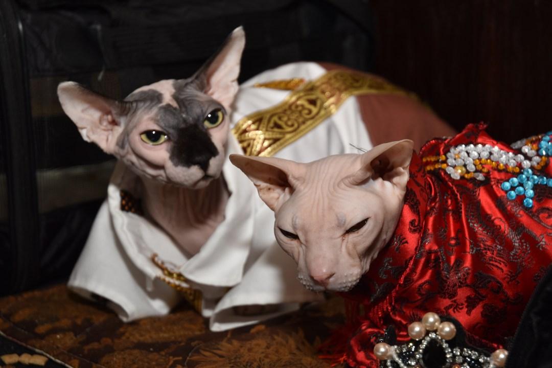 The Algonquin Cat Fashion Show 2019