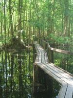 Highlands Hammock Park - Sebring, Florida