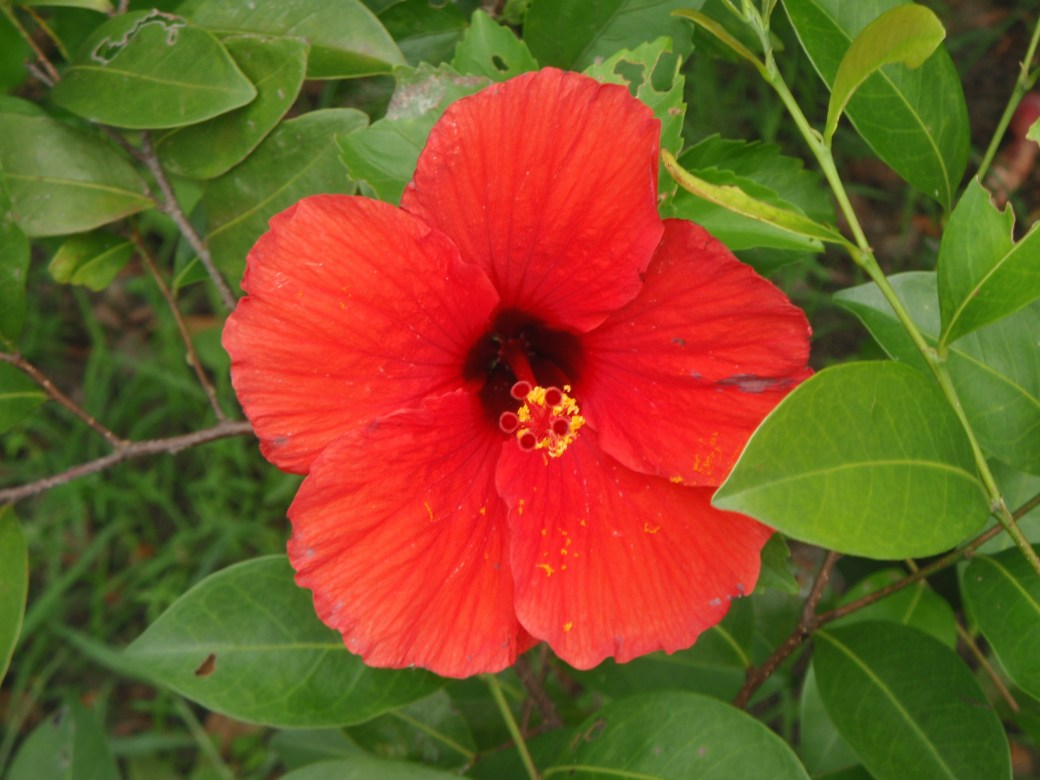 Gabon's Flower; Port Gentil, Gabon; 2010