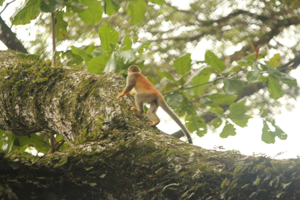 Monkey Climbing a Tree; Manuel Antonio, Costa Rica; 2013