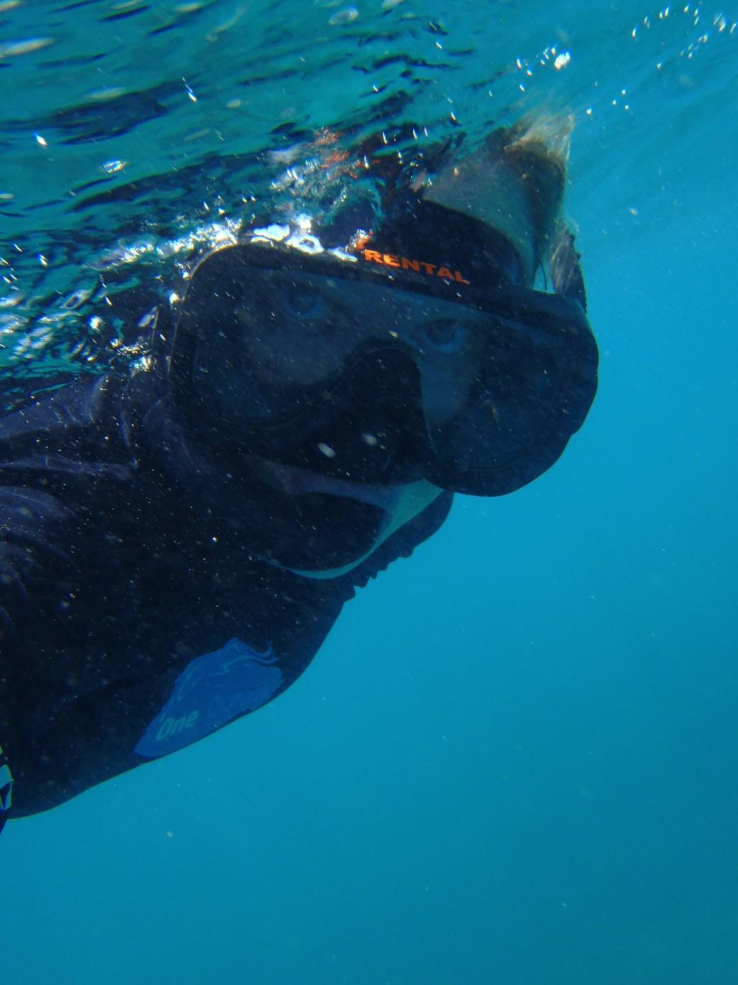 Snorkeling the Blue; Utila, Honduras; 2013