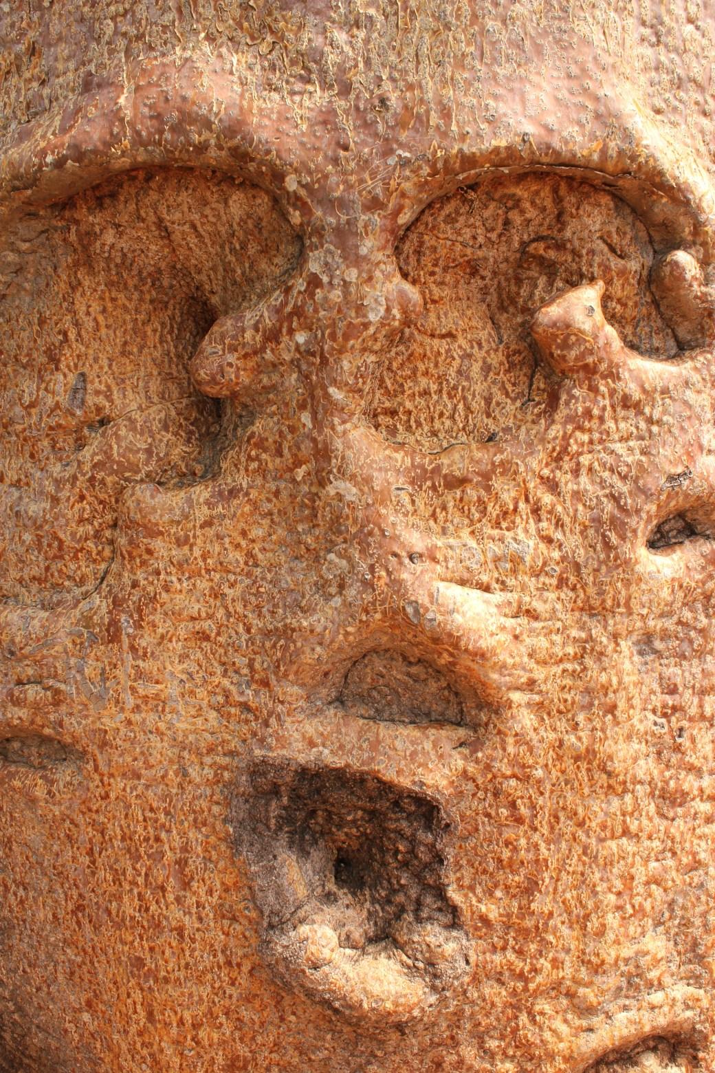 "A ""Face"" on the 500+ Year Old Baobab Tree; Ifaty, Republic of Madagascar; 2013"