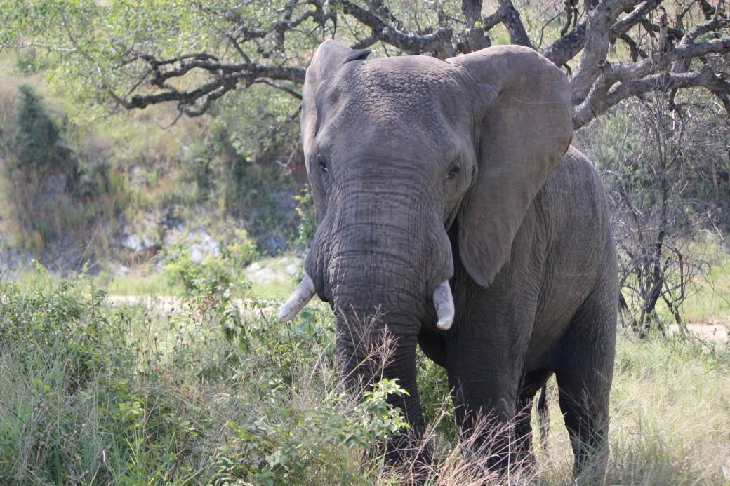 JRB @ Kruger National Park, SA; 2011 (1212)